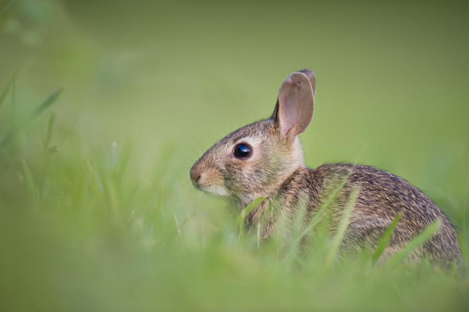 animals rabbits hares fluffy fur adorable cute field grass outdoors still bokeh