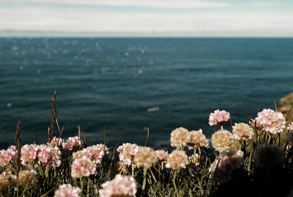 sea ocean blue water nature flower horizon cloud sky outdoor