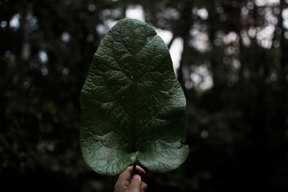dark green leaf plant hand nature bokeh