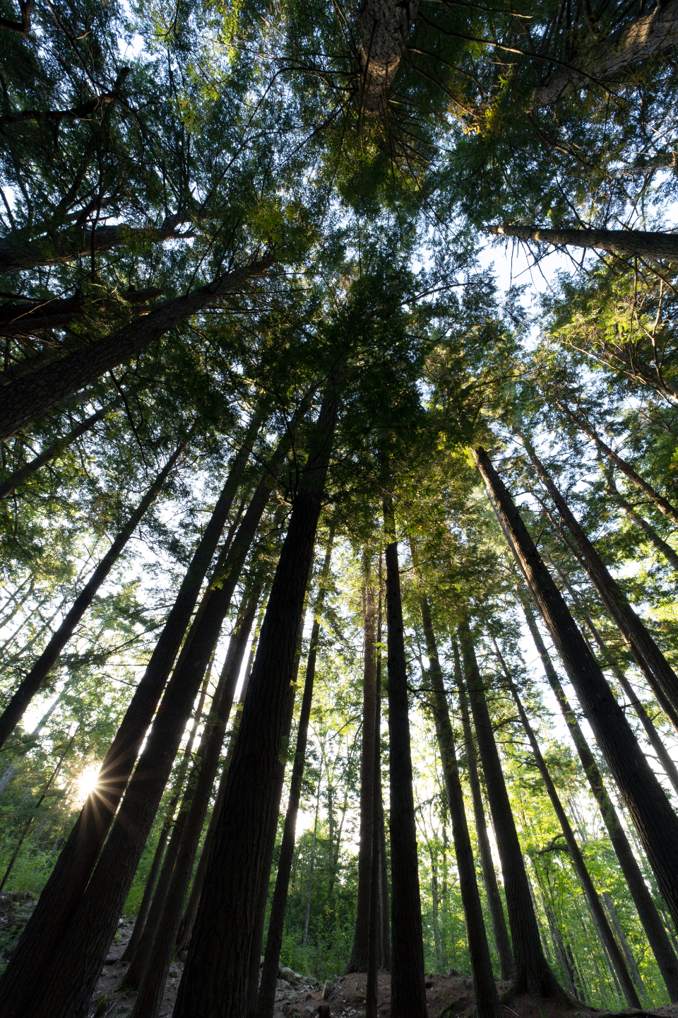 forest sky view tall trees nature growth green outdoors landscape wood environment sun exploring hiking
