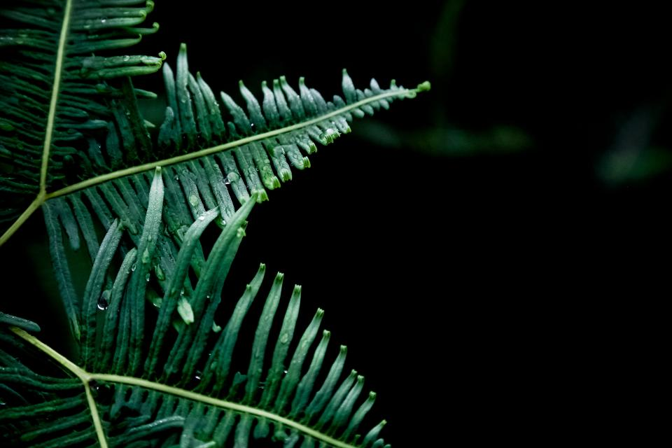 nature plants ferns leaves stems veins patterns lines linear still bokeh green