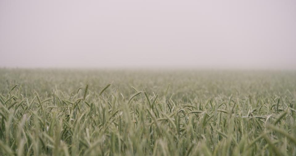 nature grass field wild fog sky still bokeh green