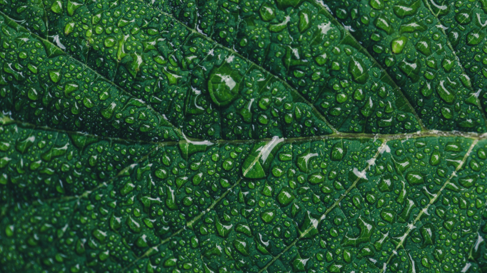 leaf water droplets close up nature outdoors plants vegetation growth green wet rain patterns