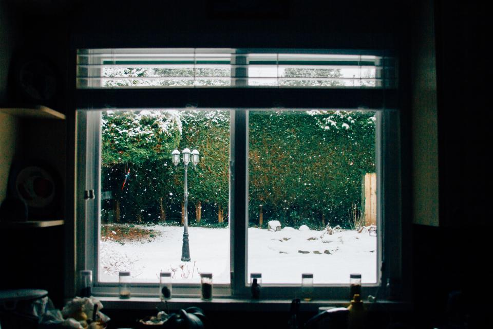 window glass dark room outdoor view trees plant nature