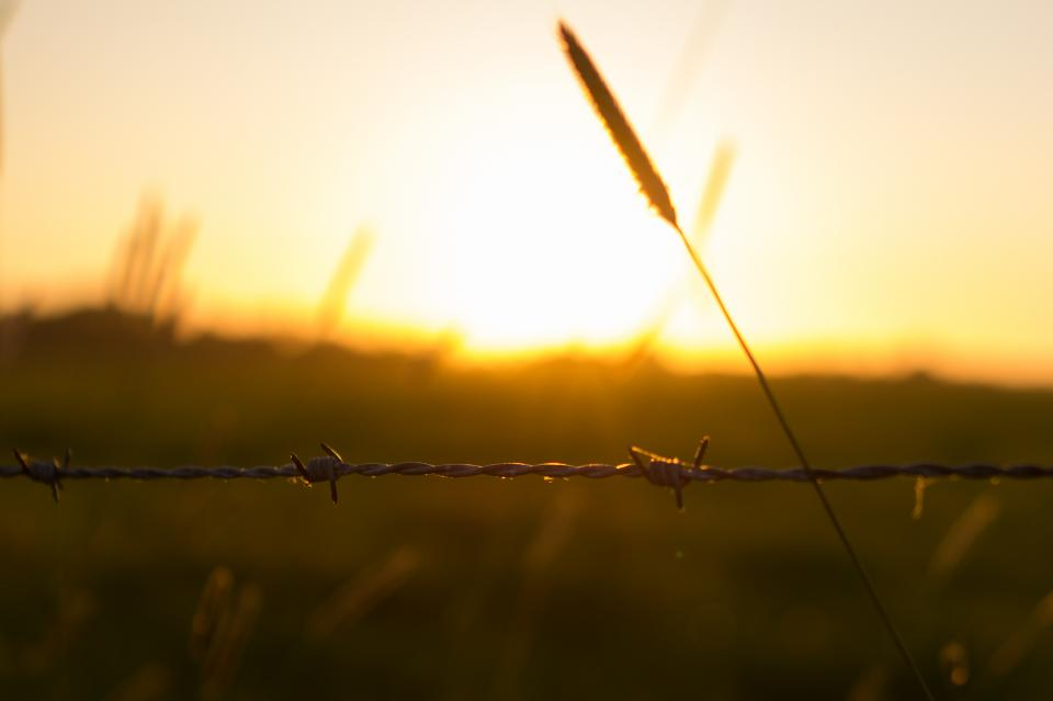 barbwire fence sunset field nature