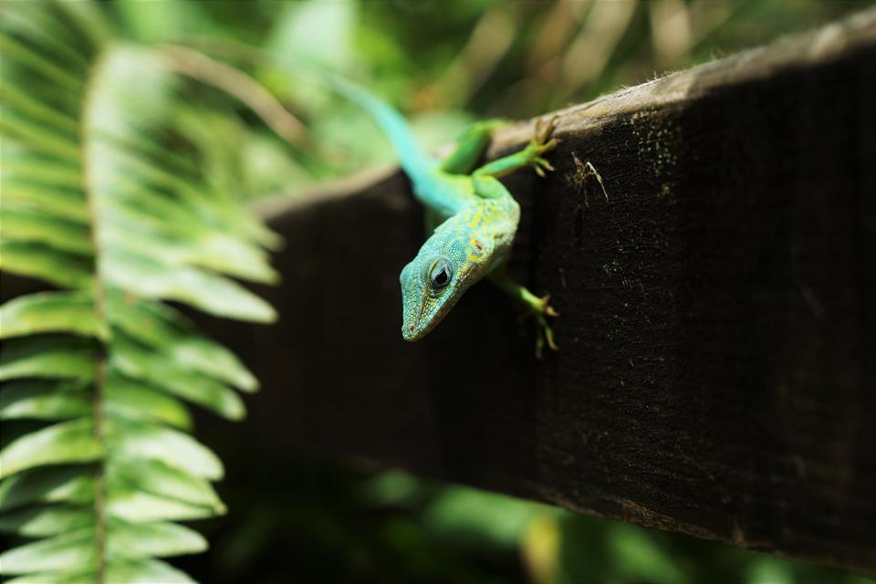animals reptiles lizard gecko tree bark tree wood leaves ferns cute adorable green still bokeh