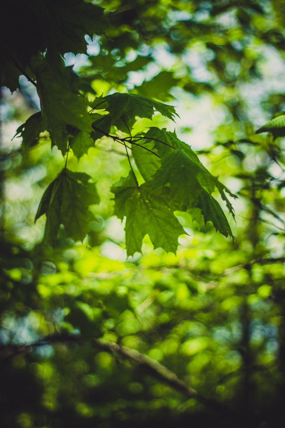 green leaf tree plant nature blur bokeh