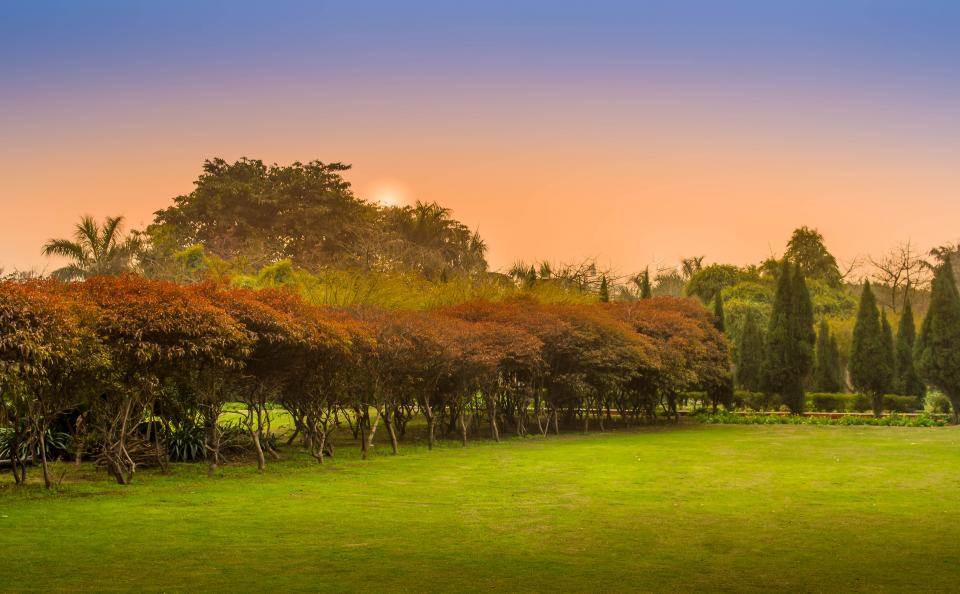 nature landscape green grass trees leaves autumn fall sunset