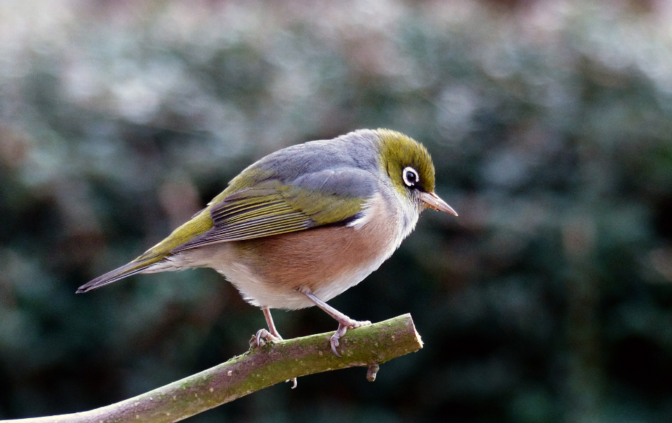 bird trees animal wildlife nature outdoors forest perch feathers bokeh colorful branch wings eye beak habitat natural