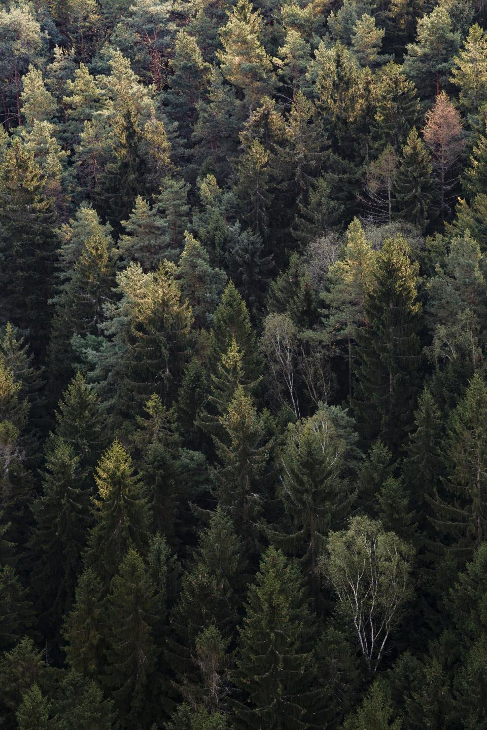 woods forest green trees aerial travel adventure