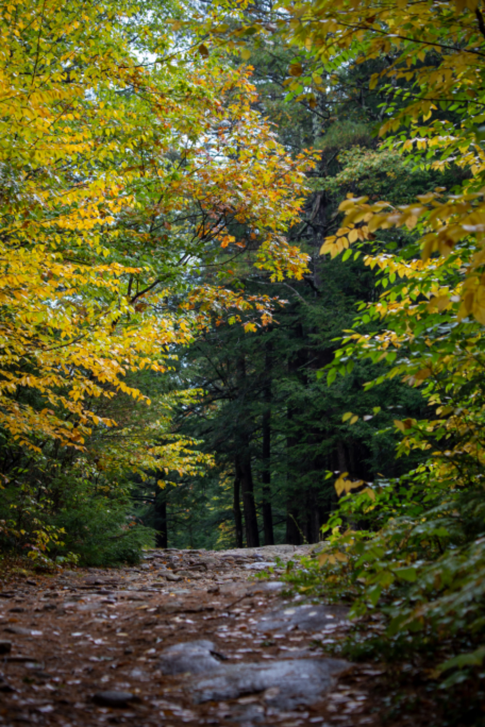 autumn woods nature forest hike trees fall foliage colorful path peaceful adventure outdoors leaves