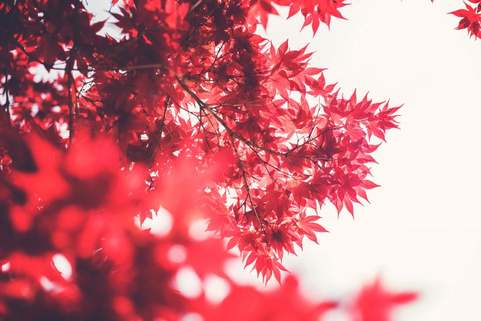 red leaves branches trees nature