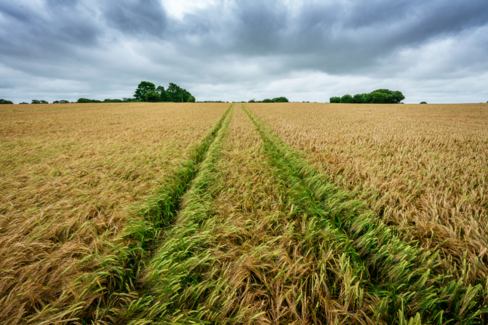 tractor field tracks landscape horizon farm farming agriculture grass hay sky clouds nature land