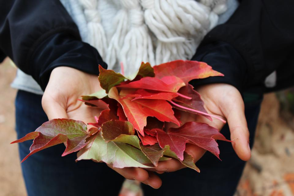 leaves autumn fall hands nature