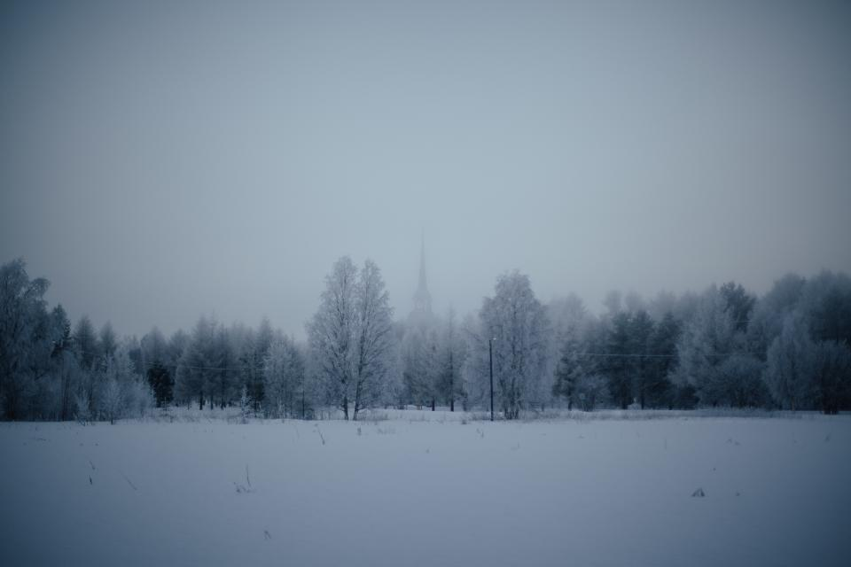 nature landscape forests trees blanket snow fog solemn white