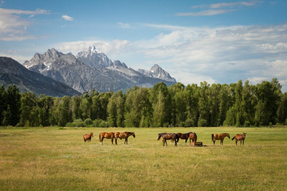 horse animal eating green grass field farm trees plant nature view landscape mountain herd