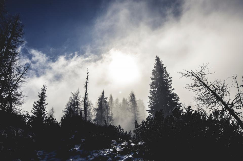 mountain clouds sky fog dark pine tree trees forest woods dark