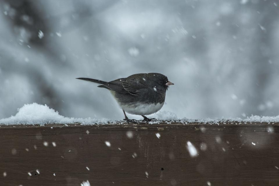 bird animal wood snow winter ice blur