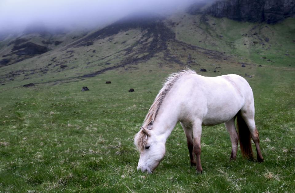animals horses beautiful mane white graze grasslands slope fog green