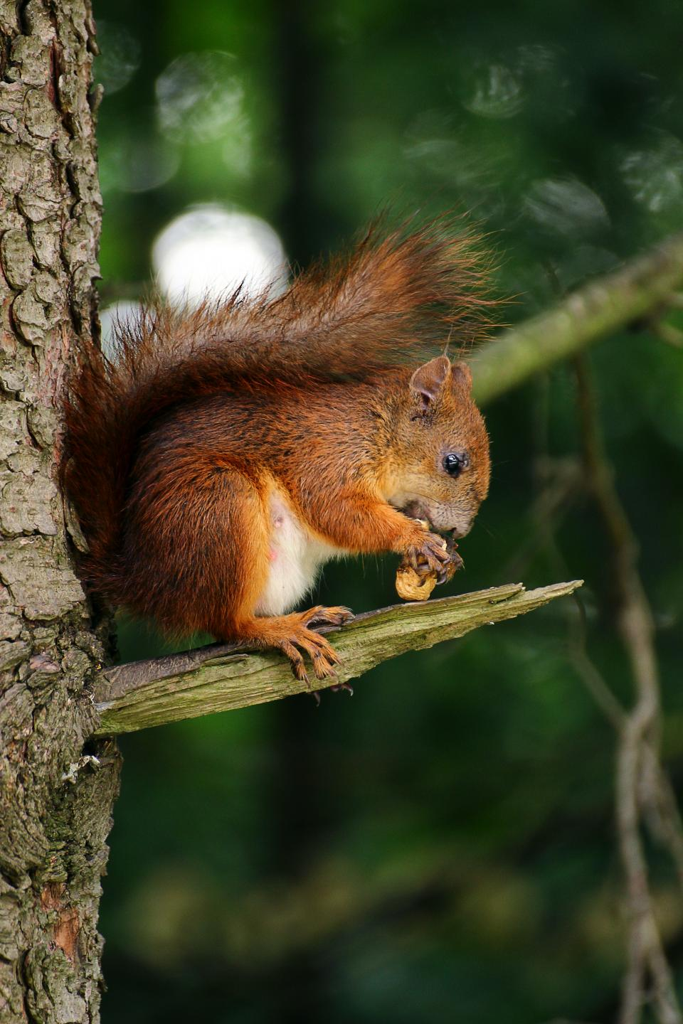 squirrel animal eating tree branch wood plant nature blur