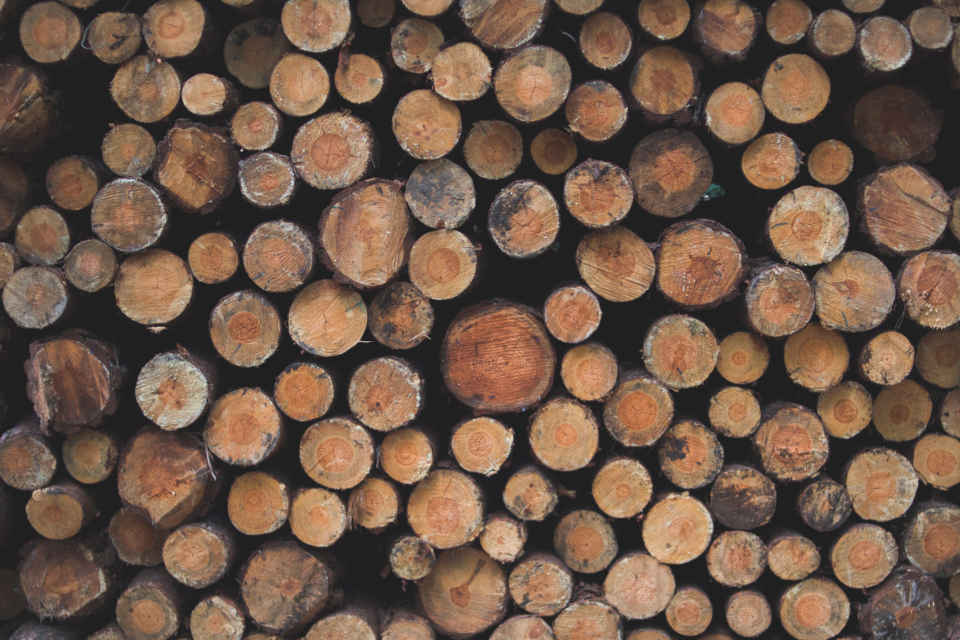 large chopped logs wood forest woods cut stacked