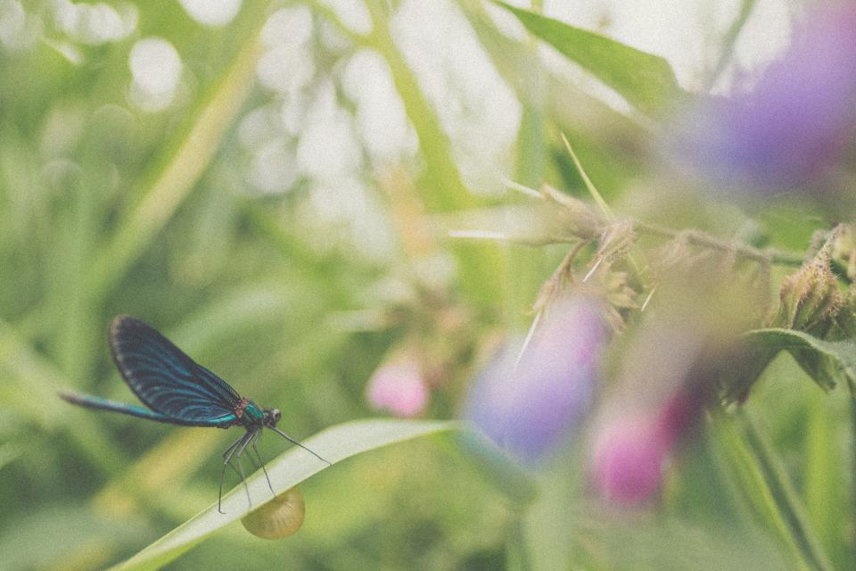 butterfly flower nature plant insect outdoor garden blur bokeh