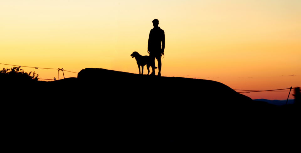 person dog silhouette boy sunset sky warm orange friends puppy pet outdoors canine kid nature peaceful