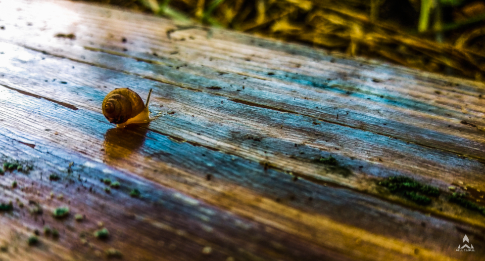 slow forest wood nature colors gorund snail insect animal rstic wet move fast