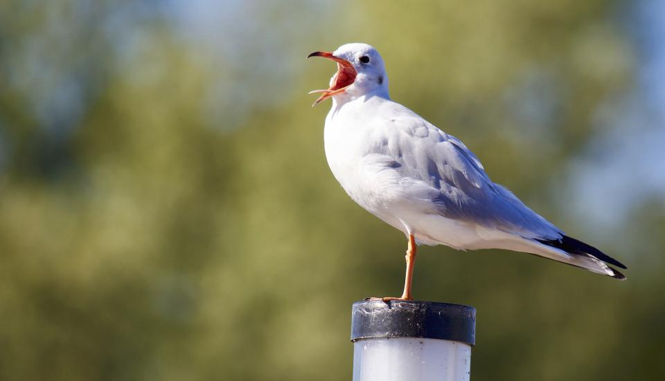 animal bird seagull white eye trees sky head feather beak bill rostrum blur