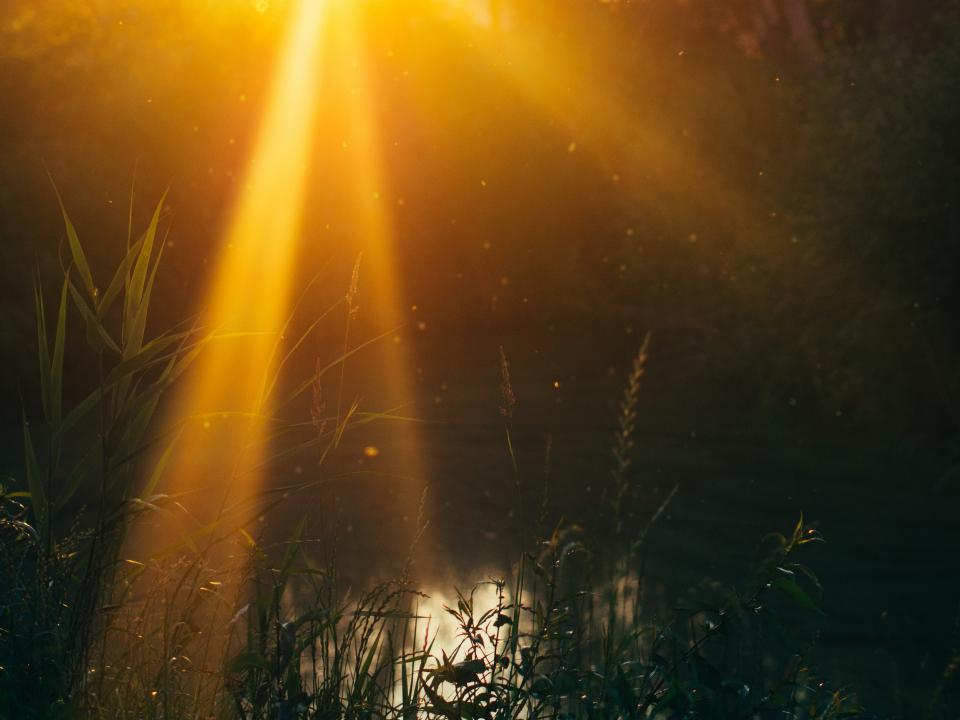 sun rays sunset lake water nature outdoors blurry dusk plants