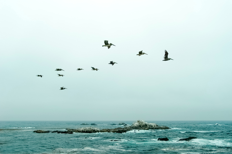 green ocean sky pelicans flying birds rocks peace nature animal life horizon water flock