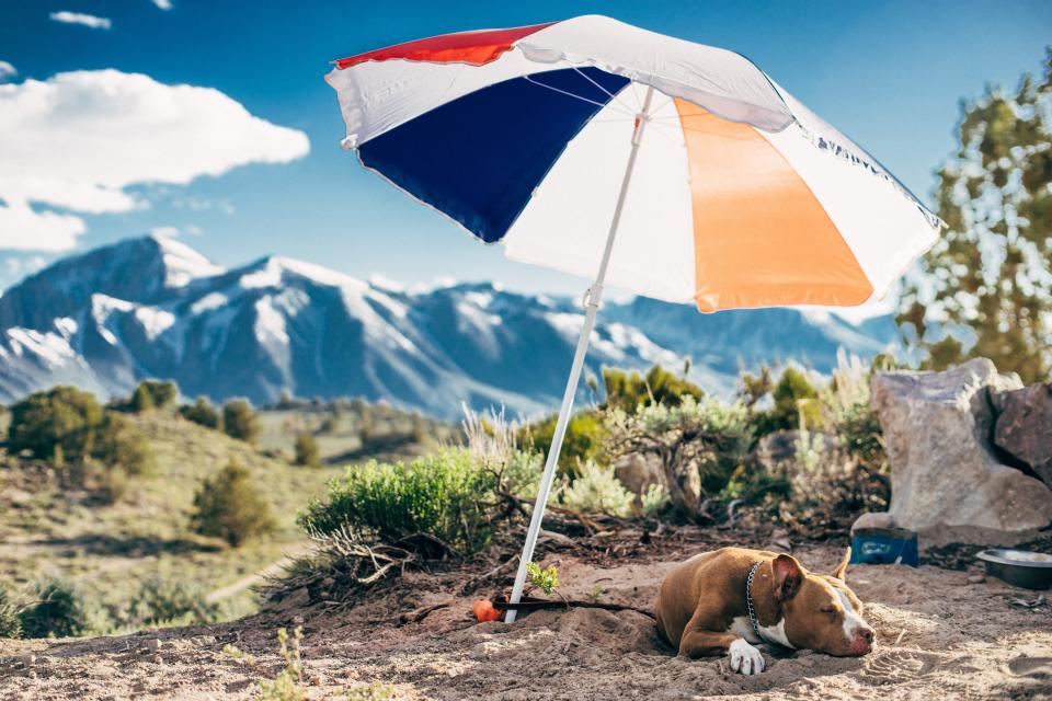 umbrella dog animal pet outdoor highland landscape mountain view