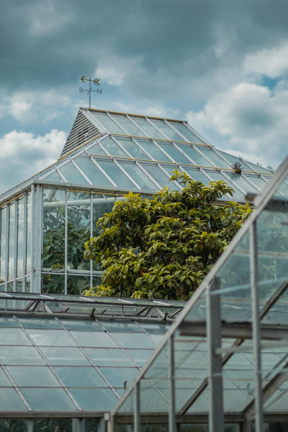 greenhouse plants nature structure glass building clouds sky