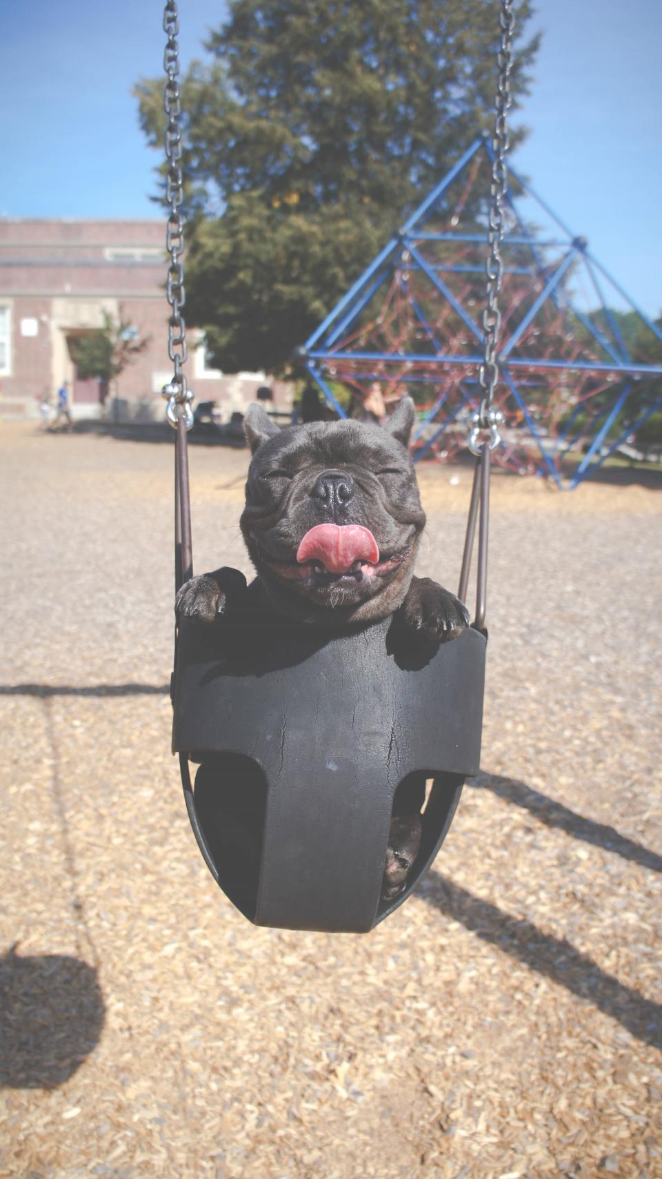 dog puppy animal cute swing happy tongue park
