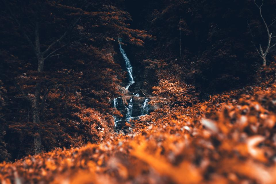 leaf fall autumn blur trees plant waterfall nature forest