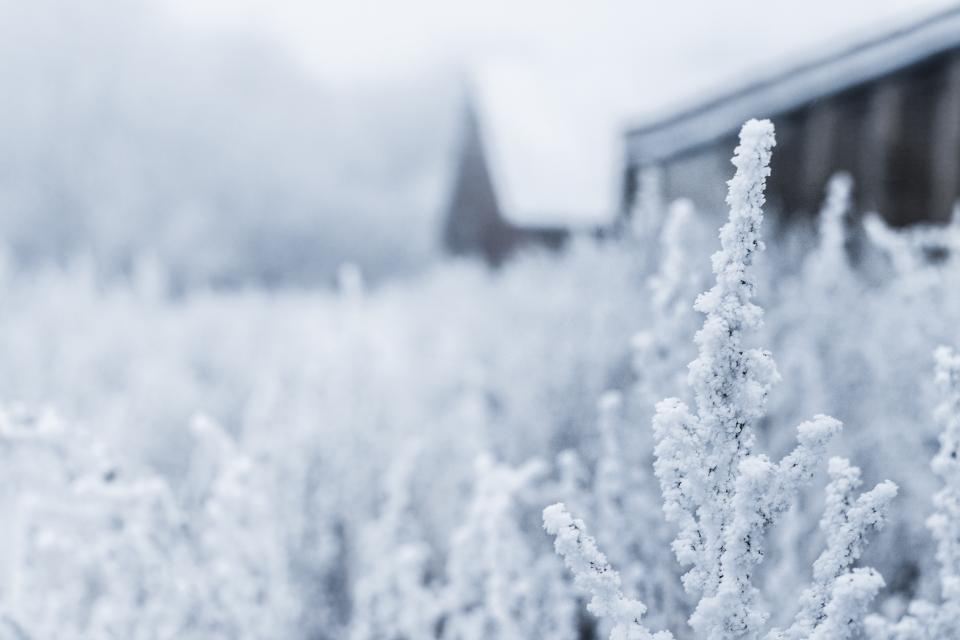 plants nature outdoors snow cold winter field