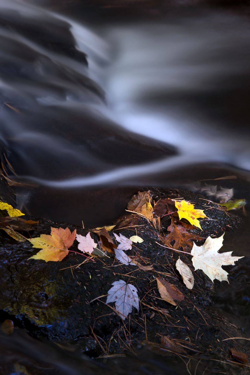 autumn leaves river water stream fall foliage season wet nature outdoors environment climate maple leaf flowing