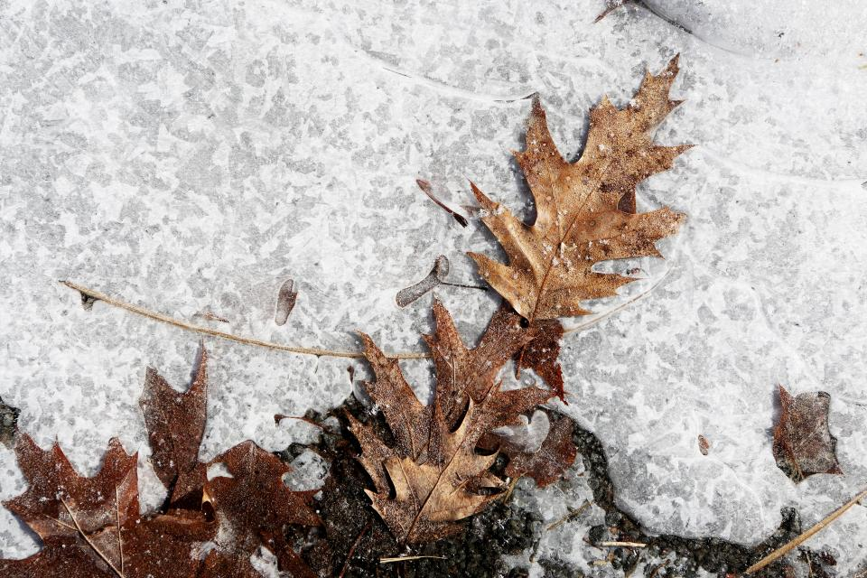 ice snow ground leaves winter frozen nature
