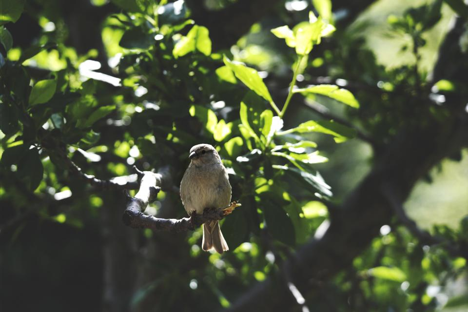 animals birds perched sit trees branches leaves still bokeh