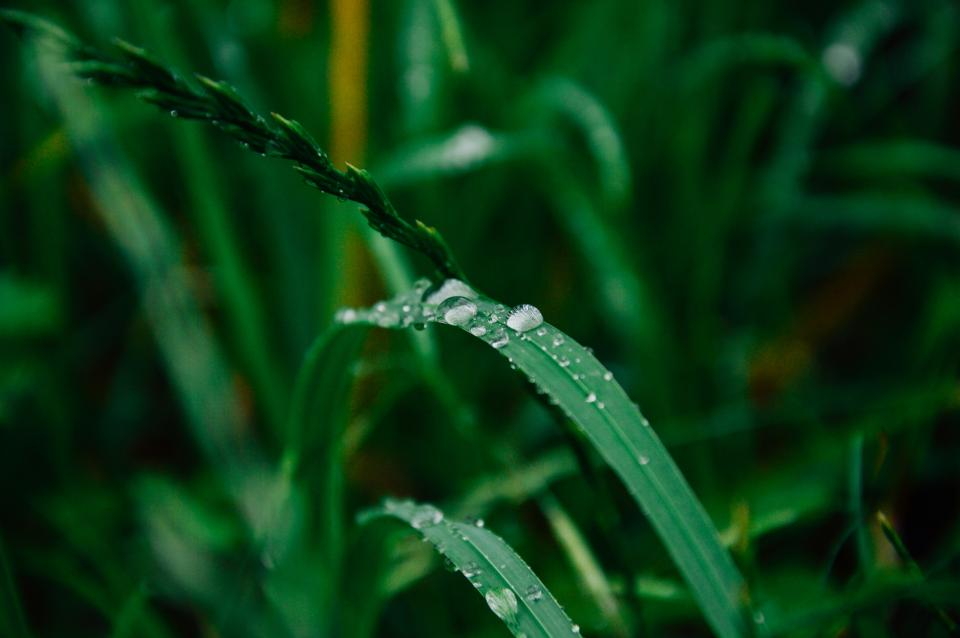 green plants leaves garden nature dew drops