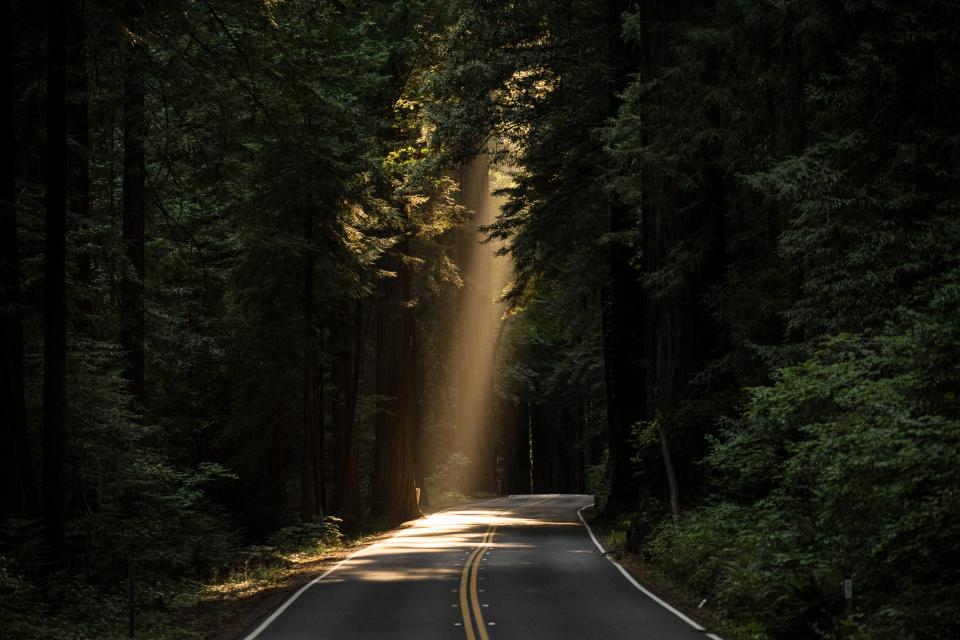 nature roads paths streets asphalt forests trees rays light beam lines perspective bend