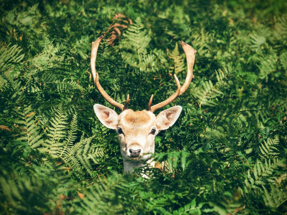 deer animal horn wildlife green plant nature forest
