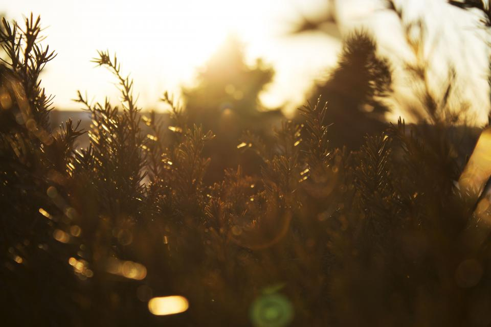 tree plant nature sunlight sunshine sunrise sunny day blur bokeh sky