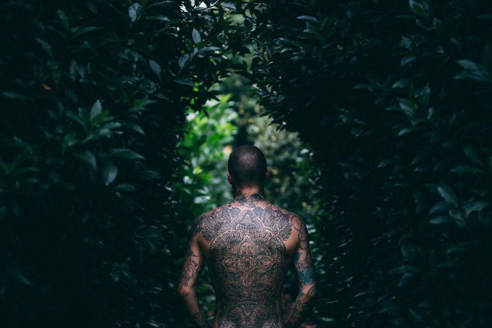 tree green plant outdoor nature people guy body tattoo