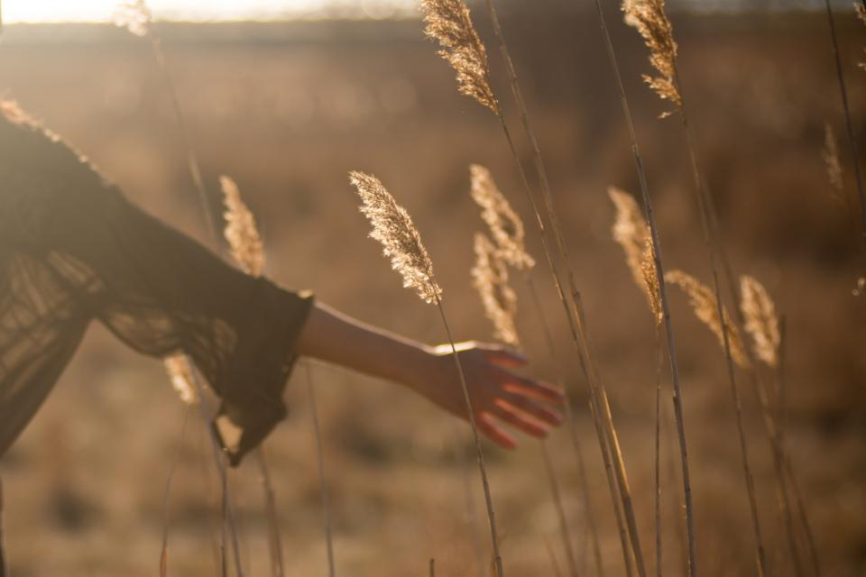 field grass yield sunny sunset people woman hands