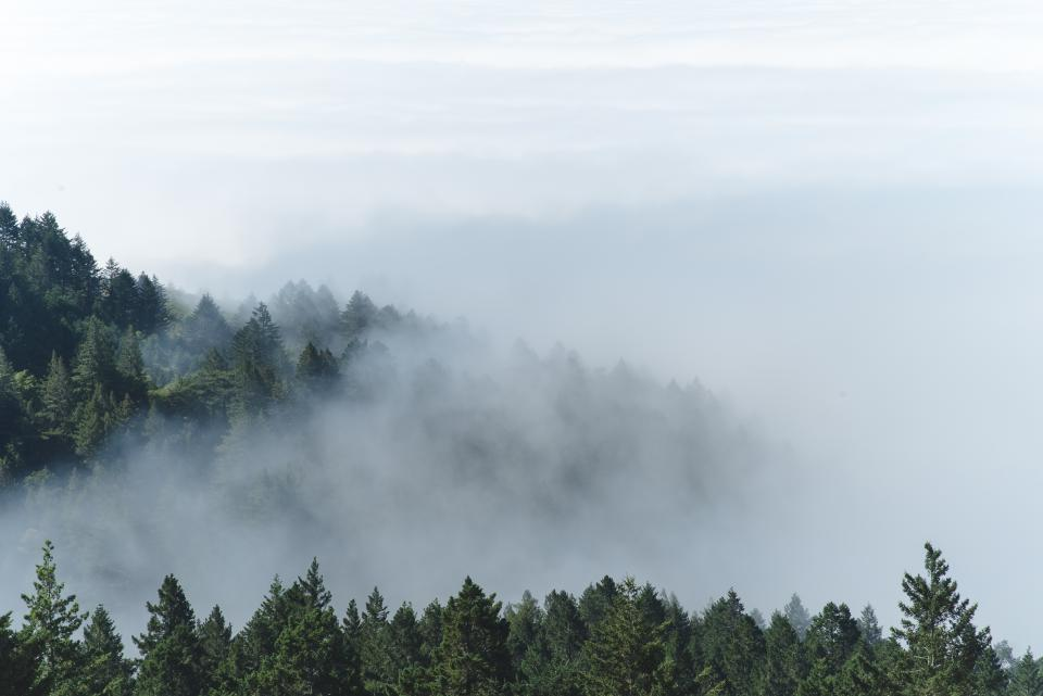 mountain forest trees pine clouds fog nature green white sky view