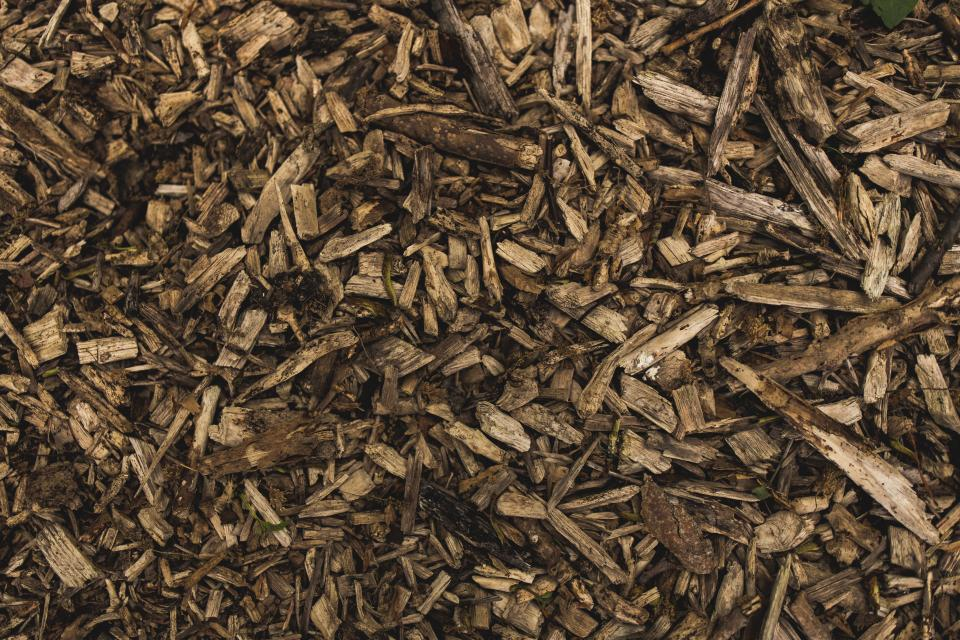 wood firewood outdoor environment