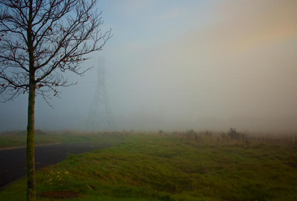 grass field trees power lines electricity foggy nature outdoors