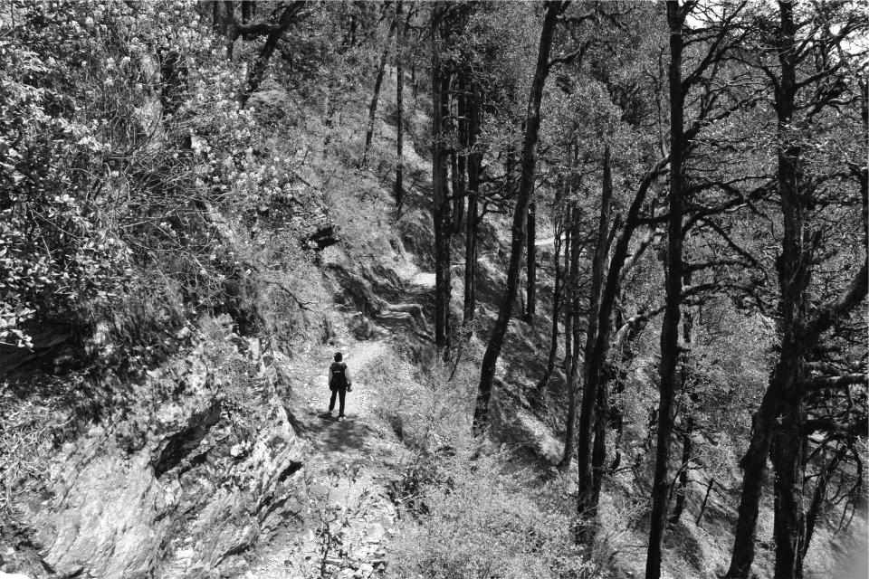 hiking trail forest trees nature black and white