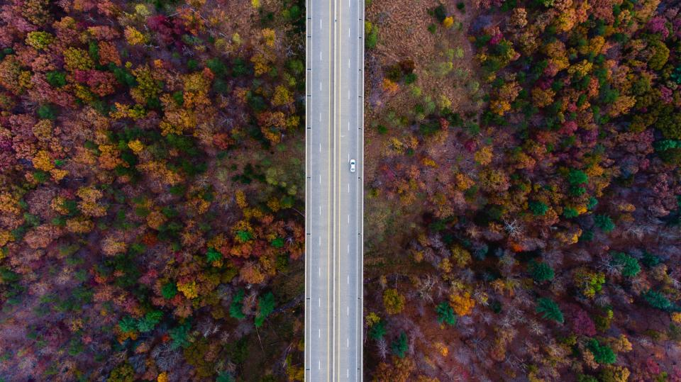 aerial view trees plants fall autumn nature landscape. road car trip travel